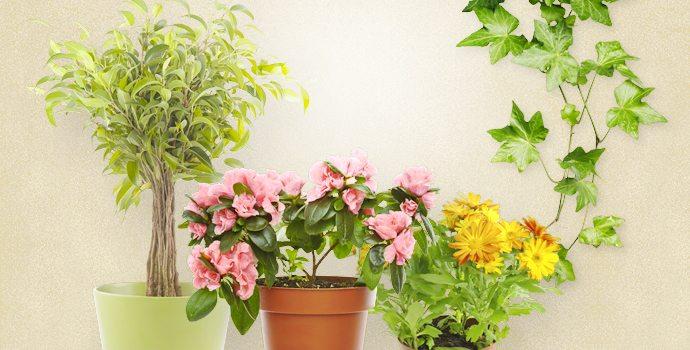 Mettez chez vous des plantes dépolluantes