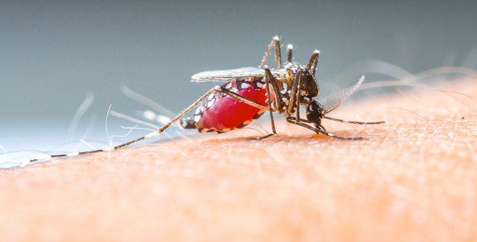 Moustiques : évitez les piqûres naturellement