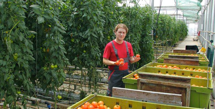 Les légumes frais de demain