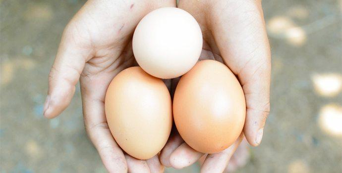 Combien d'œufs par jour