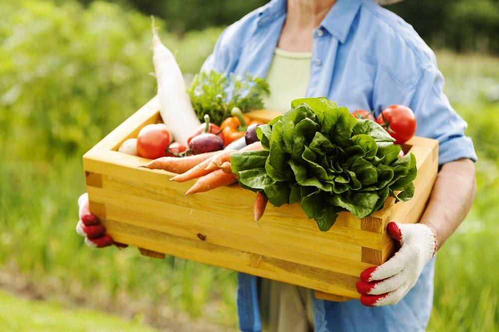 Les 10 aliments à consommer bio absolument