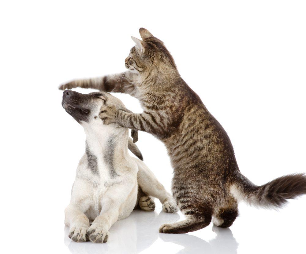 5maladies transmises par votre animal de compagnie (et comment vous en protéger)