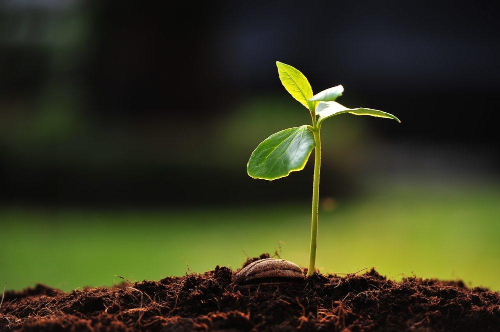 Retour historique sur les plantes sauvages
