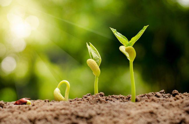 La guerre des plantes