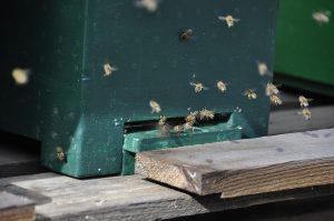 abeilles autour d'une ruche