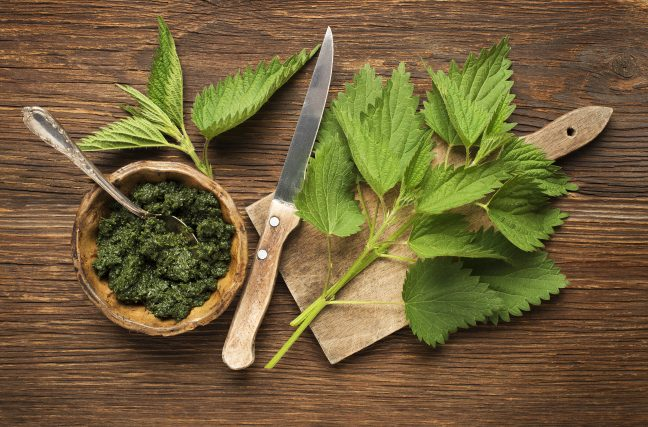 Cette plante qui combat votre arthrose, vos maux de tête et vos problèmes de prostate