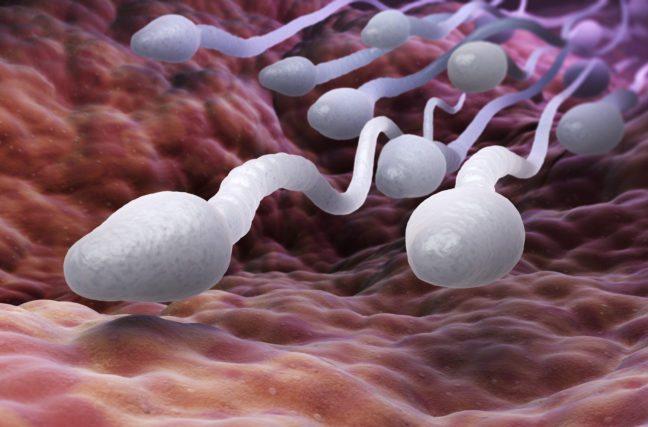 Effondrement de la fertilité masculine