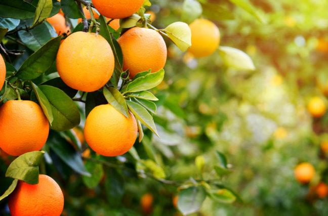 Oranges: bonnes ou mauvaises?