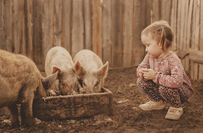 Pour la santé de vos enfants, adoptez des cochons