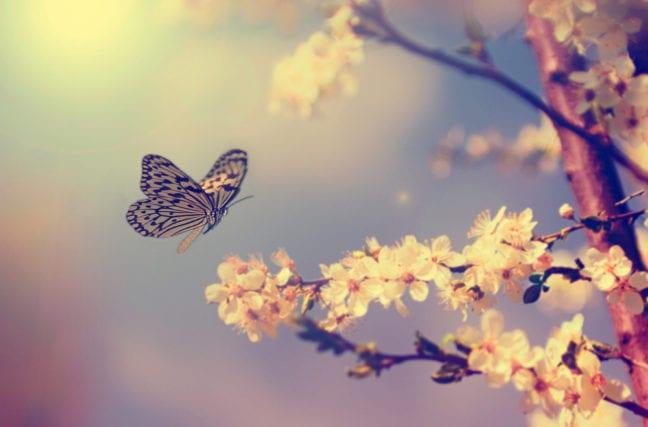 Êtes-vous grillon ou papillon ?