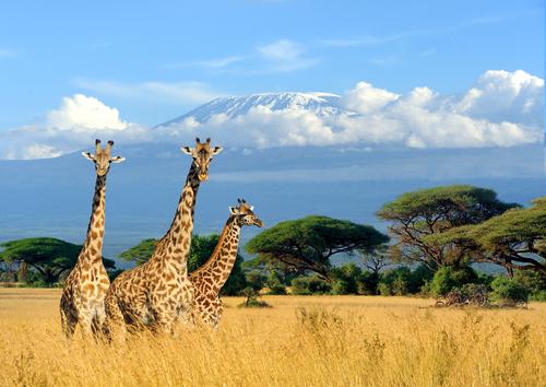 La blague de la girafe et des drapeaux